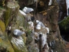 Vogelrots Borgarfjördur