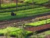 Eco-farm