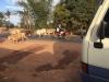 Terwijl we wachten tot onze chauffeur weer tevoorschijn komt, worden koeien door de herders naar stal gebracht