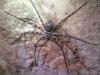 Oppassen geblazen, reusachtige spinnen zitten op de rotsen