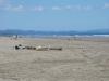 Playa Las Lajas