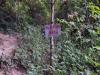 Pha Ngeun, nog 450 meter naar de top maar wij houden het voor gezien