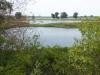 Maasplassen