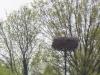 Op het nest op een houten paal broedt een ooievaar