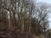 Scheveningse bosjes