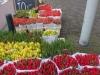 Tulpen, 50 stuks voor € 10,-