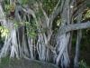 Mangroves, Everglades National Park
