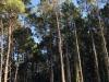 Prachtige dennenbossen