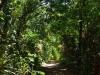 We maken een wandeling over het dicht beboste eiland, terwijl de Howler monkeys boven ons brullen