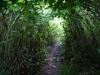 Tunnel van geitenbaard