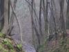 Forêt Dominiale de Marche-les-Dames