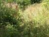 Forêt domaniale de Signy l\'Abbaye