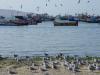 Meeuwen staan met de kop in de wind, vissersbootjes liggen voor de kust