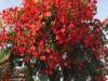 Mooie, kleurrijke bomen in een dorre, stoffige omgeving