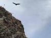 Plots zeilt vlak boven ons een condor over.
