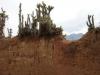 Muren opgetrokken van kleiblokken, waarop de cactussen welig tieren