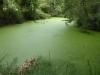 We vinden de vijver, kikkers springen in het water, maar geen schildpad te bekennen