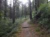 Het verharde pad gaat over in een glibberig bospad