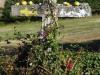 Stenen en appels zijn door peregrino's op het kruis gelegd
