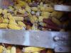 De maïs ligt er al jaren
