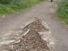 Grappig zoals de camino hier wordt aangegeven met dennenappels