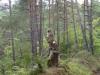 Het ruikt heerlijk in het dennenbos