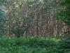 Josefien kan er geen genoeg van krijgen, de eucalyptussen