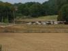 Ook zien we op een groot terrein grote varkens vrij rondlopen