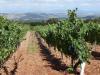 Druiven en inde verte Nájera, onze bestemming voor vandaag