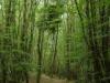 Na Chancelade duiken we al snel het bos in, we moeten flink klimmen en dalen