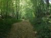 De eerste kilometers lopen we in het bos