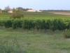Druivenvelden met kasteel in de ochtendzon