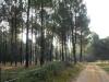 Als we de refuge van de 9 Fontaines uitlopen probeert de zon zich een weg tussen de bomen te banen