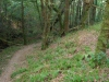 Het pad voert ons door het bos