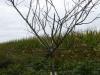 Voor de pèlerins zijn zelfs fruitbomen gepoot