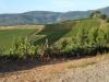 De wijnvelden, het landschap is schitterend
