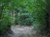 Vandaag lopen we bijna de hele dag in de schaduw van de bomen