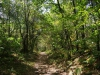 De tocht door het bos is prachtig