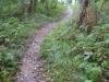 Het bospad is steil en glibberig