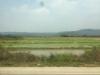 Het landschap verandert snel, we rijden langs eindeloze rijstvelden