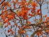 Deze mooie boom zagen we ook al langs de Mekong RIver