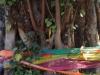Zelfs in deze reusachtige boom is een Boeddha gehuisvest