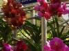 De orchideëenfarm, plukken kost geld