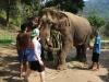 De olifanten worden gevoederd en geaaid