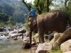 Na de lunch gaan de olifanten in bad