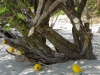 Ao Kio Na Nok, een mooi strand met zilverachtig zand en schaduwrijke bomen