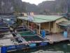 We bezoeken nog een viskwekerij
