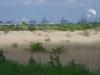 De vogelrijke rietlanden van het zilte Oostvoornse meer