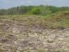 Een veld met duinviooltjes, op een zandverstuiving aan de zuidzijde