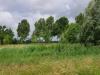 Het Vrijheidsbos